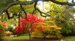 acers under oak