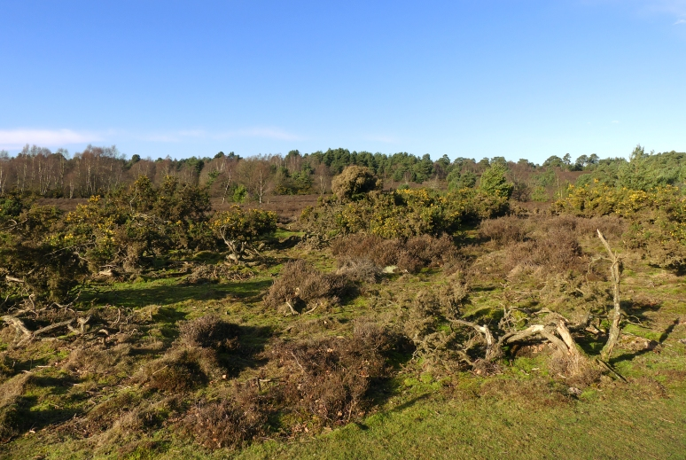 winter_heathland